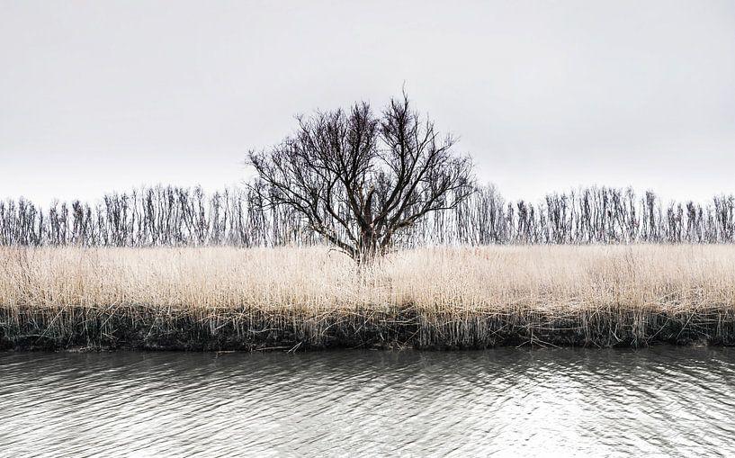 De winterboom van Ricardo Bouman | Fotografie
