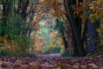 Lembeekse bossen in kikvorsperspectief van Alain Gysels