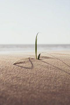 Dünengras am Meer von Loran Schoen