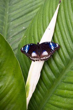 Vlinder op blad von Ilse Radstaat