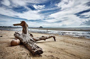 Gestrand drijfhout en kokosnoot van Graham Forrester