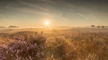 Lever de soleil Kalmthoutse Heide 2 sur Bart van Dongen