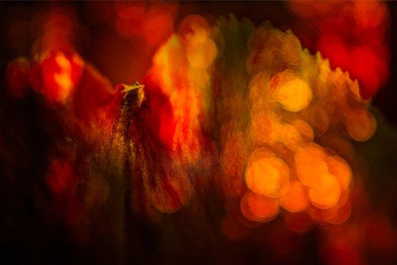 Abstract Amaryllis van Dick Jeukens