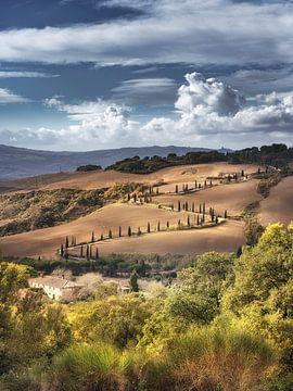 Zypressenweg mit Toskana Landschaft in Italien. von Fine Art Fotografie