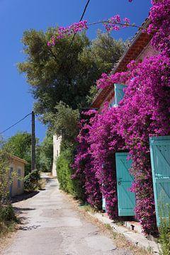 Kleurige Bloemen aan de Côte d'Azur van