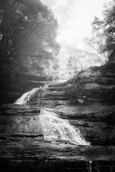 Regenwoud in de mist XIII van Ines van Megen-Thijssen
