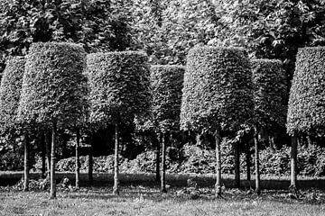 Lampenkap bomen van Tot Kijk Fotografie: natuur aan de muur