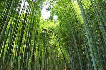 Groen Bamboe Bos, Kyoto Japan van SK Lee