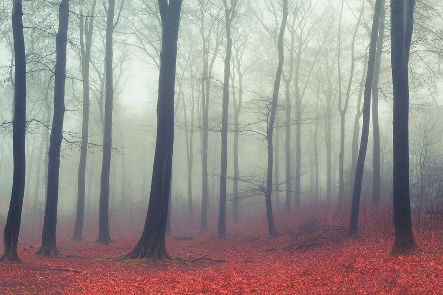 Deciduous Forest in Fog van Dirk Wüstenhagen