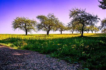 Zwabische Toscane van Michael Nägele