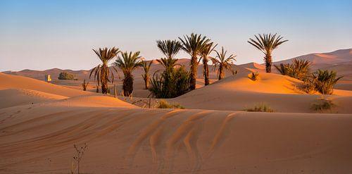 Oase bij Merzouga, Marokko