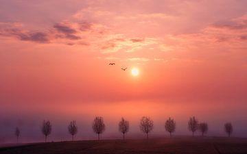 Sonnenaufgang im Nebel von Rob Sprenger