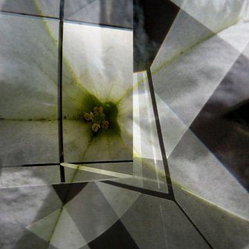 White flower van Marleen Vermeulen
