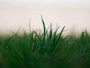 Grassprietjes von Angelo van der Klift