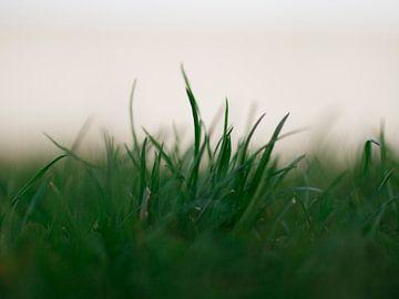 Grassprietjes van