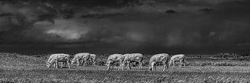 Koeien in het Noorderleeg met een een donkere wolkenlucht von Harrie Muis