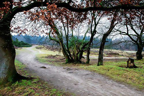 Zeegser Duinen:  Heide met bomen en overhangende tak