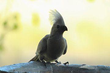 Grauer Vogel von Marieke Funke