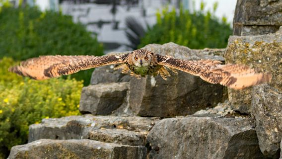 Spread you're wings. van Richard Lentjes
