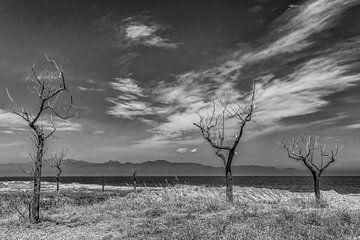 Dode bomen von Gerrit Kuyvenhoven