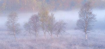 Panorama von Silberbirken im Nebel von Jurjen Veerman