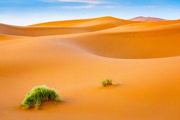Eine Pflanze in der Sahara von Sam Mannaerts