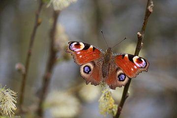 Vlinder von t de bruin