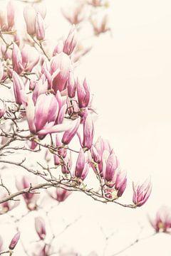 Arbre Magnolia sur Marina de Wit