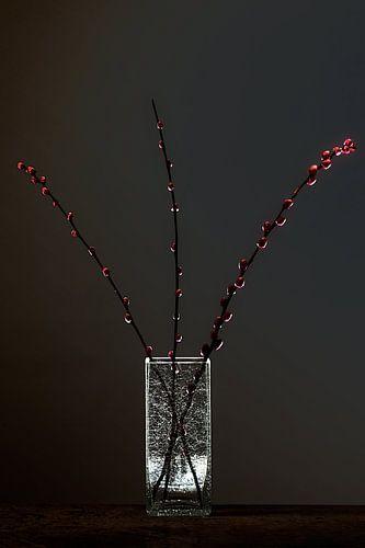 Dark Matter 3 - Stilleven met elzenproppen