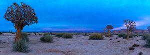 Panorama van de Kalahari woestijn tijdens het blauwe ochtenduur, Namibië van
