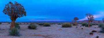 Panorama van de Kalahari woestijn tijdens het blauwe ochtenduur, Namibië van Rietje Bulthuis
