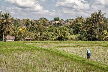 Rijstvelden bij Ubud op Bali - Indonesie van Dries van Assen
