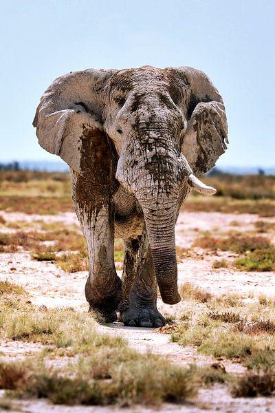 Namibië's Olifanten van W. Woyke