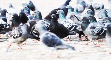 Tauben auf dem Dammplatz. von Hester Hielkema