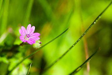 Klein bloempje op de stoep sur Vincent van den Hurk