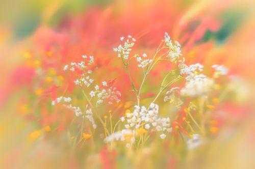 Blumenwiese mit roten und weißen Farben von Ron Poot