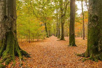 Herbstfarben im Wald bei Roosendaal von Jan Poppe
