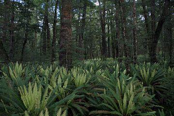 Varens in het regenwoud - Nieuw Zeeland von Jeroen van Deel