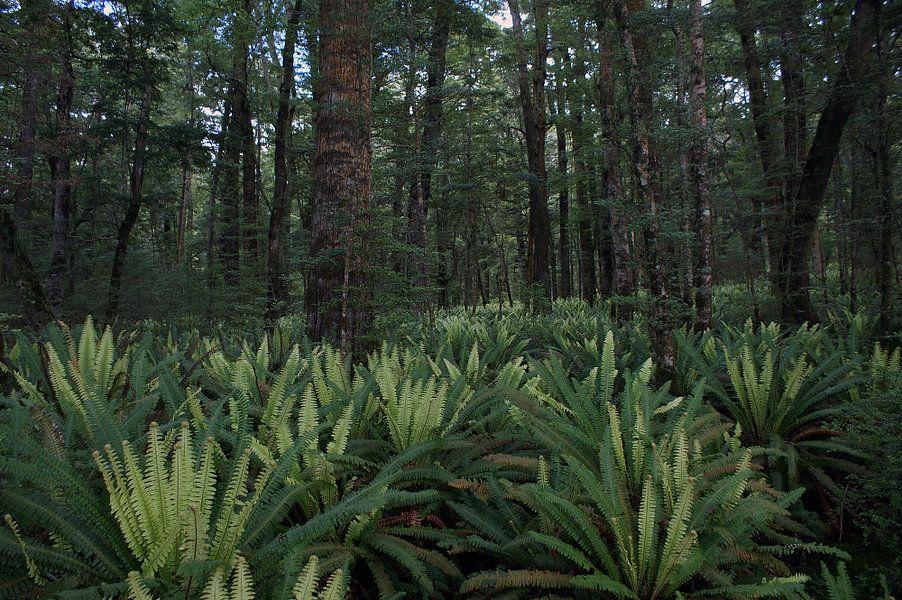 Varens in het regenwoud - Nieuw Zeeland van Jeroen van Deel