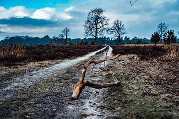 Hondsrug sur MDGshots