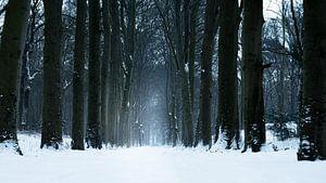 Sneeuwlaan van Sake van Pelt