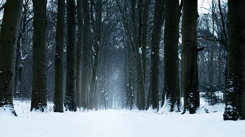 Sneeuwlaan