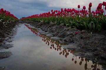 Rund um die Tulpen von Studio de Waay