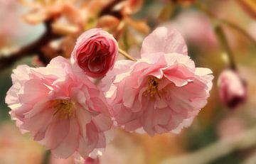 Frühling  sur Violetta Honkisz