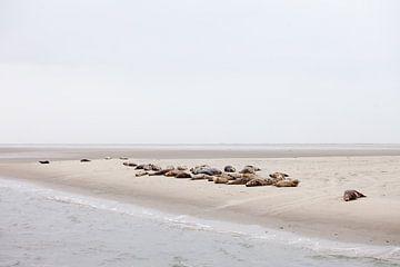 Zeehonden op een zandbank van BYLDWURK BYLDWURK
