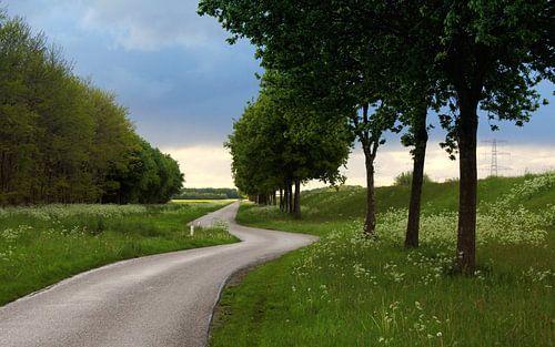 Groen van Wim Popken
