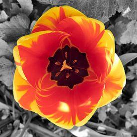 Tulp van Erik Reijnders