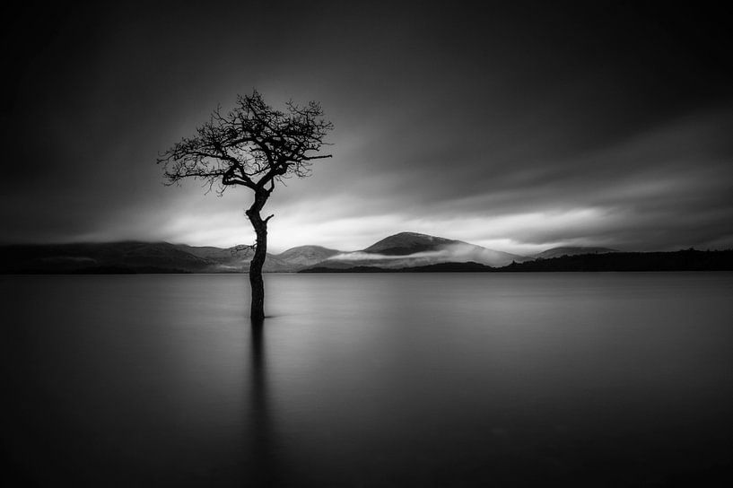 The Lonely Tree in BNW von Valerie Leroy Photography