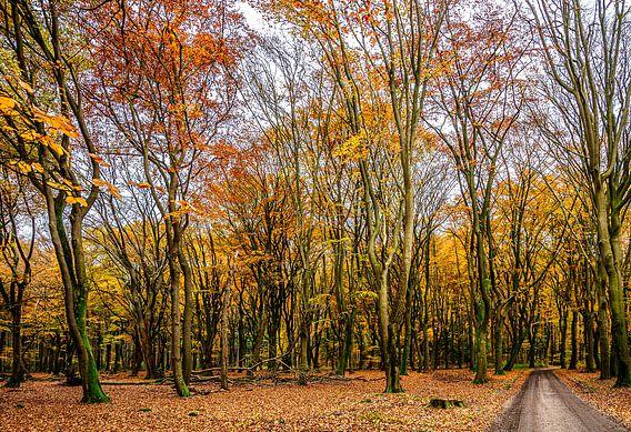Herfst in Uddel