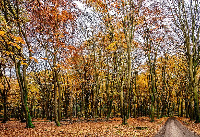 Herfst in Uddel van Hans Lebbe